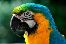 blue-macaw-at-the-john-ball-zoo-in-grand-rapids-michigan.jpg
